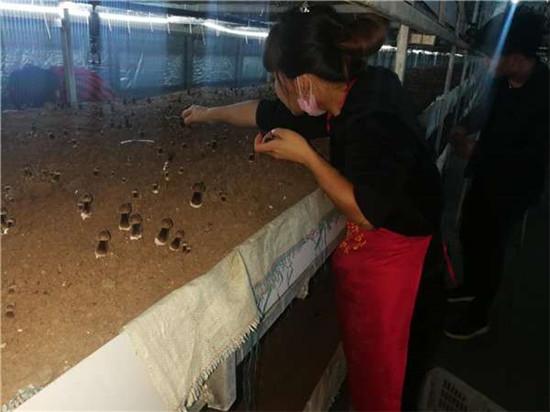 【六村共建看太康网络主题宣传】大许寨罗古洞:食用菌种植,富了村民美了环境